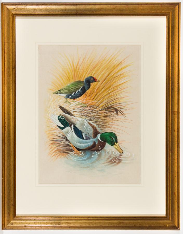 Framed Mid 20th Century Watercolour on Silk - Mallard Duck and Moorhen