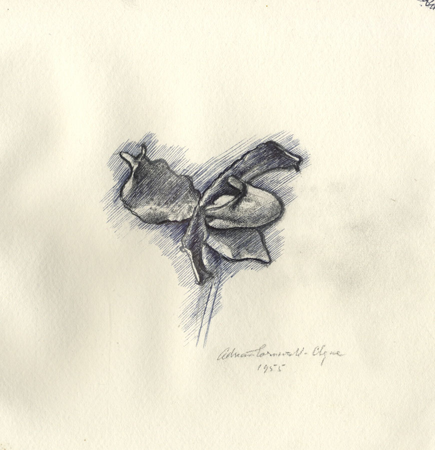 Adrian Cornwell-Clyne MBE FRPS - 1955 Pen and Ink Drawing, Flower