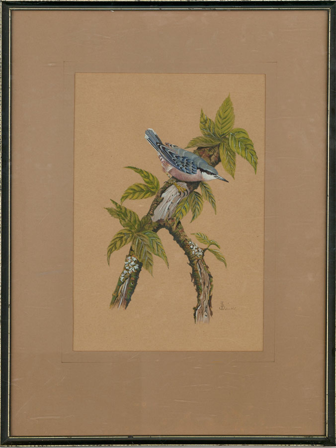 John David Banks - Signed & Framed 1979 Watercolour, Perching Nuthatch