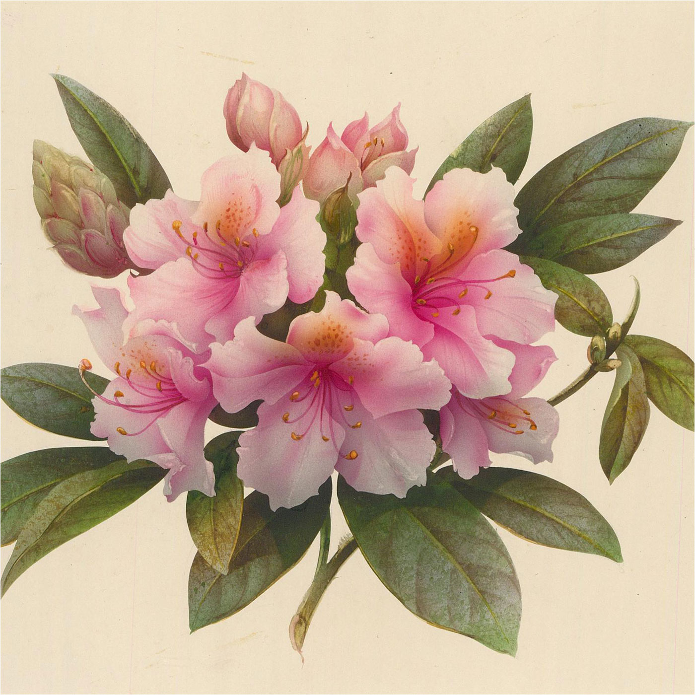 20th Century Watercolour - Tropical Flowers