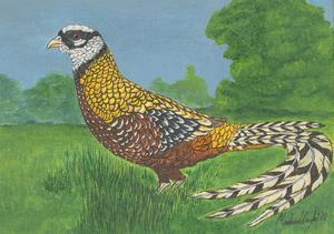 Marlene Wright - 2000 Acrylic, Pheasant